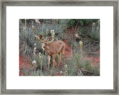'wild' Times At Garden Of The Gods Colorado Framed Print by Christine Till