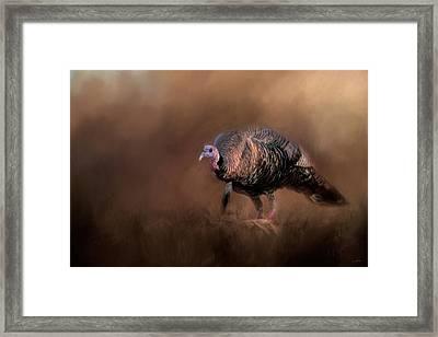 Wild Turkey In The Woods Framed Print by Jai Johnson