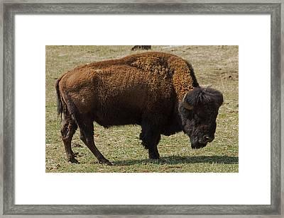 Wild West Framed Print by Ben Zell