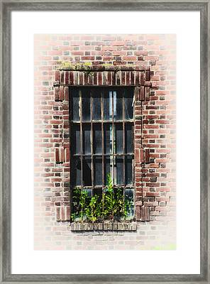 Wild Window Garden Framed Print by Bill Cannon