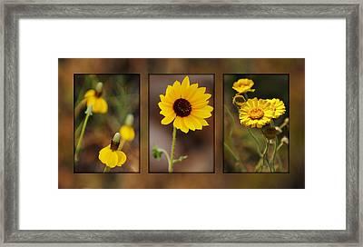 Wildflower 3 Framed Print by Jill Reger
