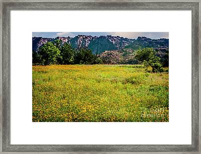 Wildflower Field In The Wichita Mountains Framed Print by Tamyra Ayles