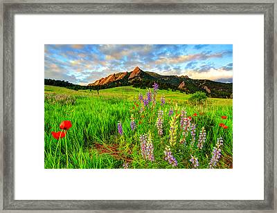 Wildflower Mix Framed Print by Scott Mahon