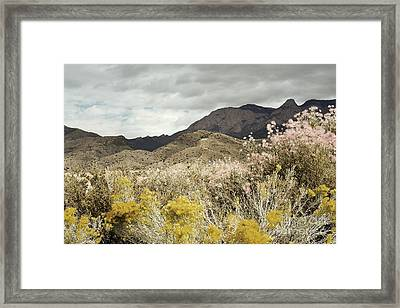 Wildflower Mountain Framed Print by Andrea Hazel Ihlefeld