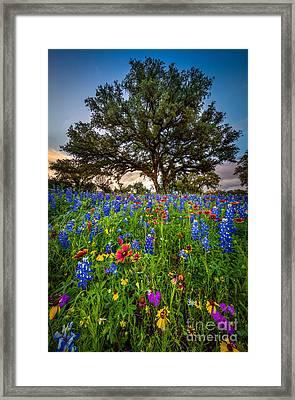 Wildflower Tree Framed Print by Inge Johnsson
