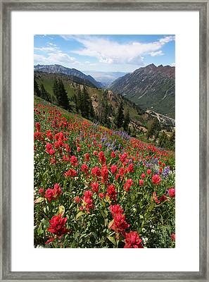 Wildflowers And View Down Canyon Framed Print by Brett Pelletier