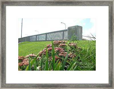 Wildflowers Beside The Bridge Framed Print by Marsha Heiken