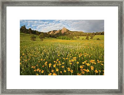 Wildflowers Framed Print by Lightvision