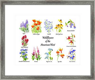 Wildflowers Of The American West Poster Framed Print by Sharon Freeman