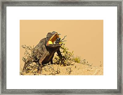 Wildlife - Last Second Framed Print by Andy-Kim Moeller