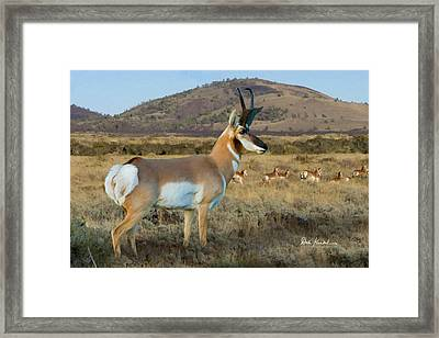 Wildlife Art - Pronghorn Antelope Framed Print by Dale Kunkel Art