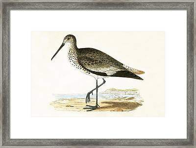 Willet Framed Print by English School