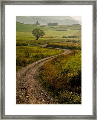 Willow Framed Print by Davorin Mance