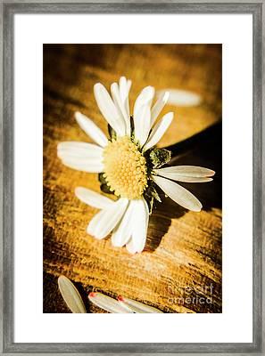 Wilt Framed Print by Jorgo Photography - Wall Art Gallery