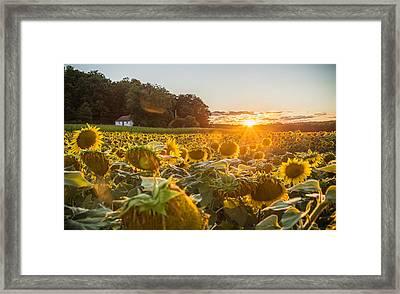 Wilted Sunset Framed Print by Kristopher Schoenleber