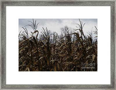 Wind Blown Framed Print by Linda Shafer