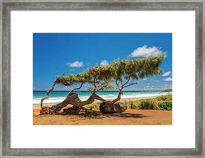 Wind Blown Tree Framed Print by Brian Harig
