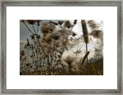 Windig Framed Print by Renata Vogl