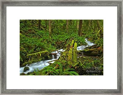 Winding Through The Wilderness Framed Print by Adam Jewell