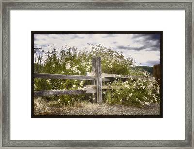 Windswept Framed Print by Joan Carroll