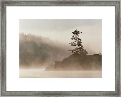 Windswept Pine IIi Framed Print by Jon Butler