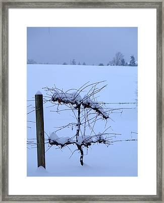 Wine Cooler Framed Print by Everett Bowers
