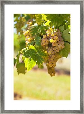 Wine   Framed Print by Ulrich Schade