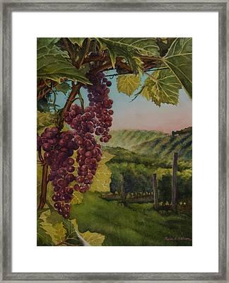 Wine Vineyard Framed Print by Heidi E  Nelson