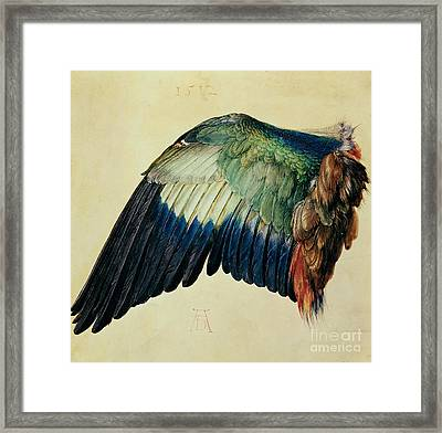 Wing Of A Blue Roller Framed Print by Albrecht Durer