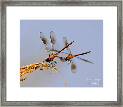 Wingman Framed Print by Robert Frederick