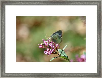 Wings And Petals Framed Print by Betty LaRue