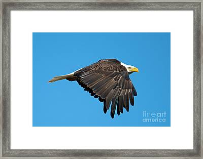 Wings Down Framed Print by Mike Dawson