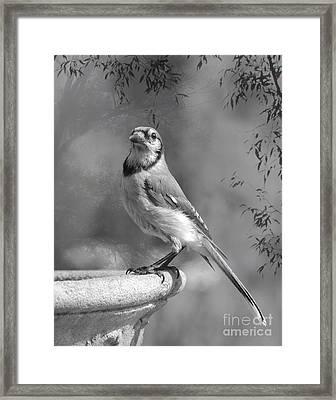 Wings In My Dreams II Framed Print by Jan Piller