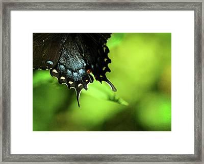 Wings Framed Print by Rebecca Sherman