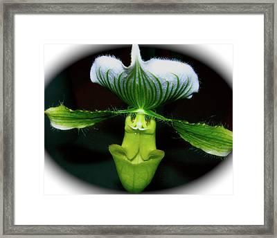 Wingspan Orchid Framed Print by Randy Rosenberger
