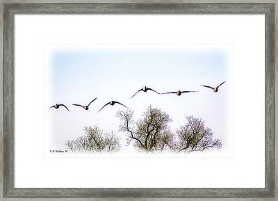 Wingspread Framed Print by Brian Wallace