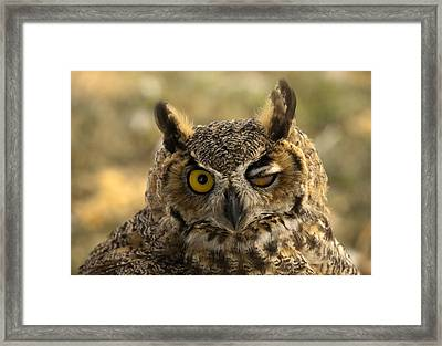 Wink Framed Print by Mike  Dawson