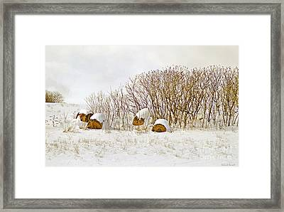 Winter Beauty Framed Print by Deborah Benoit