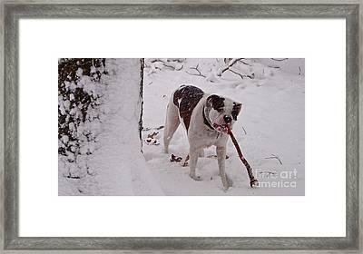 Winter Camouflage  Framed Print by E Robert Dee