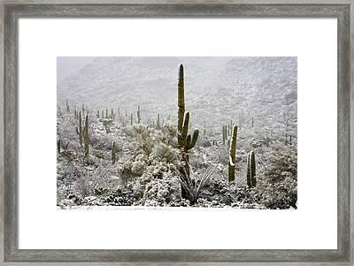 Winter Comes To The Desert  Framed Print by Saija Lehtonen