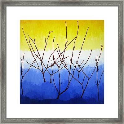 Winter Dogwood Framed Print by Oliver Johnston