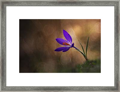 Winter Flower Framed Print by Edoardo Gobattoni