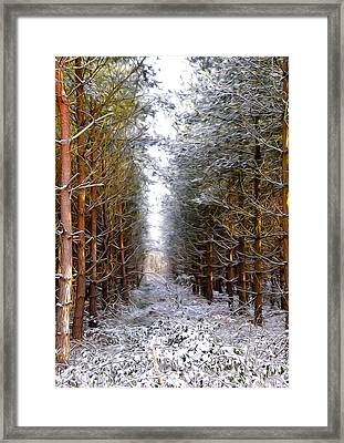 Winter Forest Framed Print by Svetlana Sewell