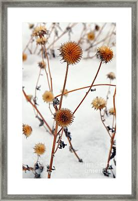 Winter Forlorn Framed Print by Chalet Roome-Rigdon