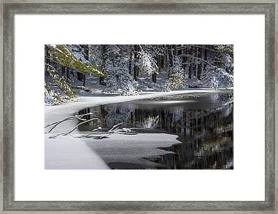 Winter Fresh Framed Print by Karol Livote