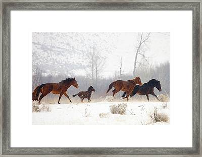 Winter Gallop Framed Print by Mike  Dawson