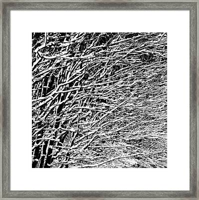 Winter Framed Print by Gert Lavsen