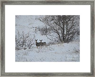 Winter Greeting Framed Print by Chalet Roome-Rigdon