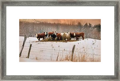Winter Hay Framed Print by Lori Deiter