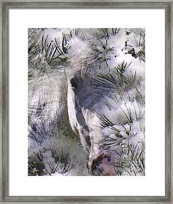 Winter Horse Framed Print by Terril Heilman